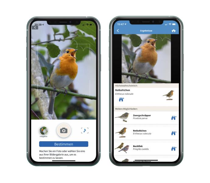 Hand mit Vogel-App