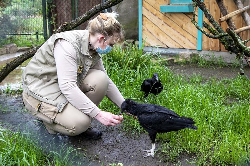 Tierpflegerin mit Rabengeier