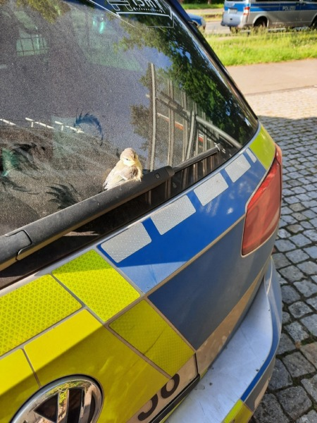 Meise Polizeiwagen