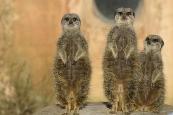 3G ab Oktober Erlebnis-Zoo Hannover