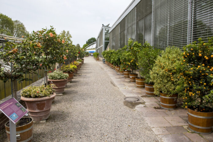 Herrenhäuser Gärten - Berggarten - Tropenhäuser
