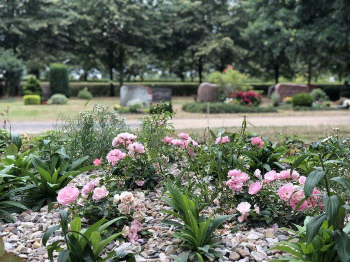 Rosen Friedhof Langenhagen-Grenzheide