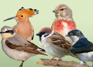 NABU - Vogel des Jahres-