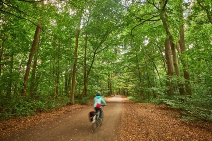Radfahrer in der Eilenriede in hannover